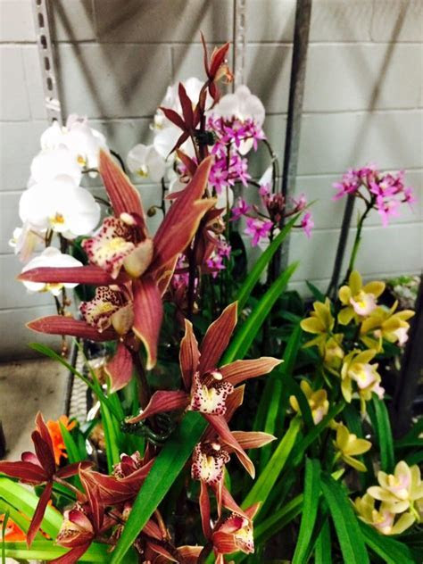Can mex wholesale flowers   Home   Facebook