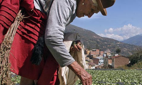 A Bolivian woman dries coca leaves