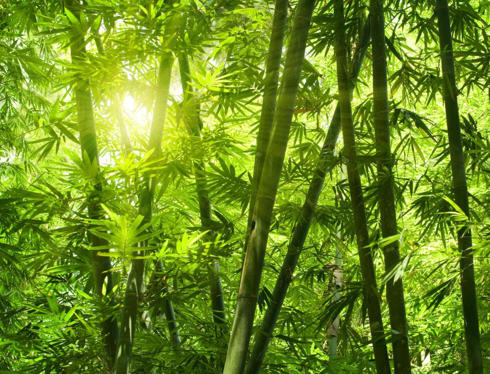 Image result for bamboo