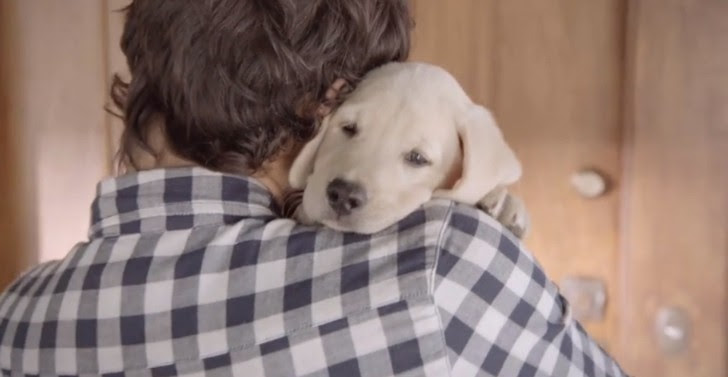 Budweiser Puppy Shows the Cute Side of Responsible Drinking [Video]