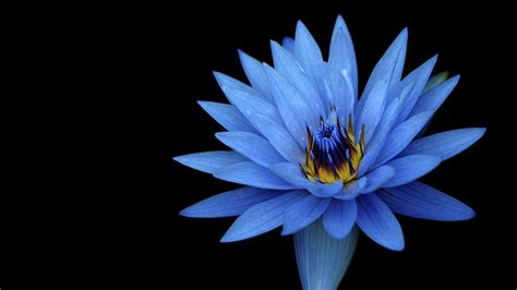 sony xperia  stock blue flower wallpapers hd wallpapers id