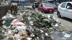 With the major increase of the non-white population increase in India comes the non-stop overflow of trash, with huge trash piles along roadways, in random fields and right outside apartments and housing developments.  The extent of these piles and the animals that roam through them is staggering.