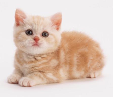 Download 94+  Gambar Kucing Lucu Berpasangan Paling Baru HD