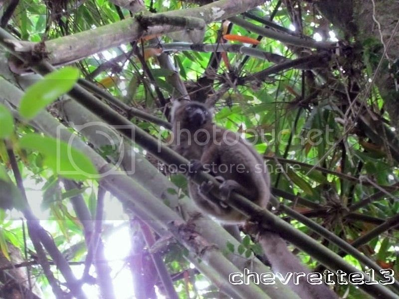 http://i1252.photobucket.com/albums/hh578/chevrette13/Madagascar/IMG_1316800x600_zps7425271d.jpg