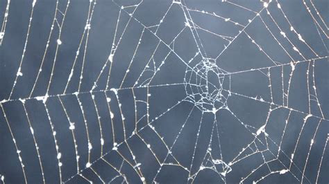 Free photo: Cobweb, Dark, Smoke, Mystical   Free Image on