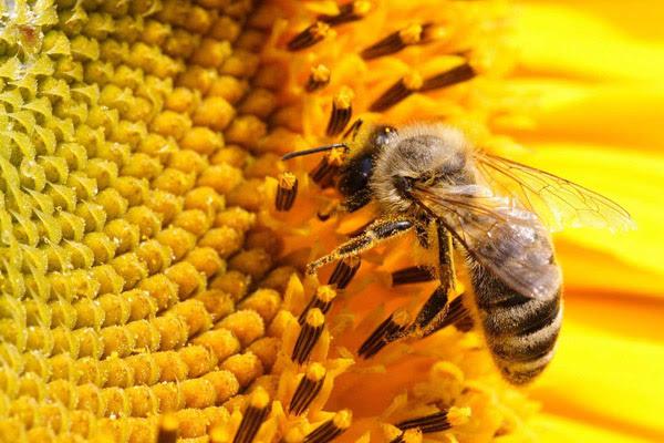 Укусила оса, что делать если укусила оса, укусила пчела, ребенка укусила оса, укус шершня, что делать если укусила пчела, укус осы, укус пчелы