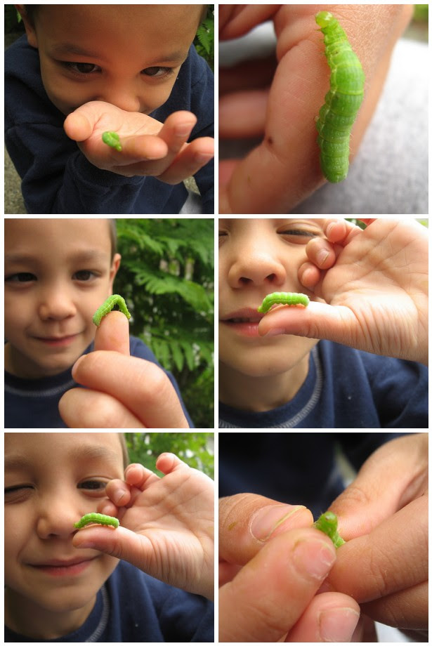 Caterpickle tickle