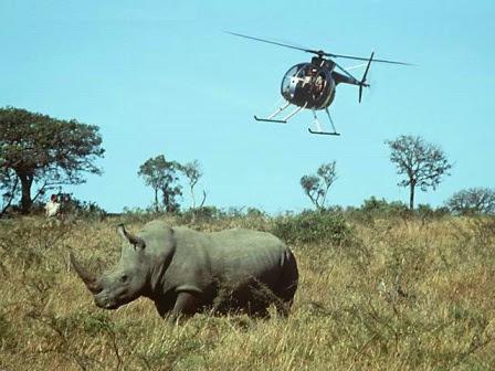 Rinocerontes En Peligro De Extincion Rinocerontepedia