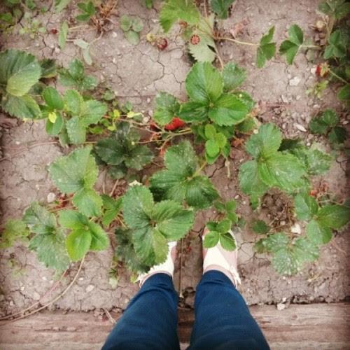 #garden #strawberry