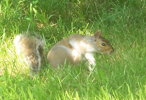 Squirrel_709_itch