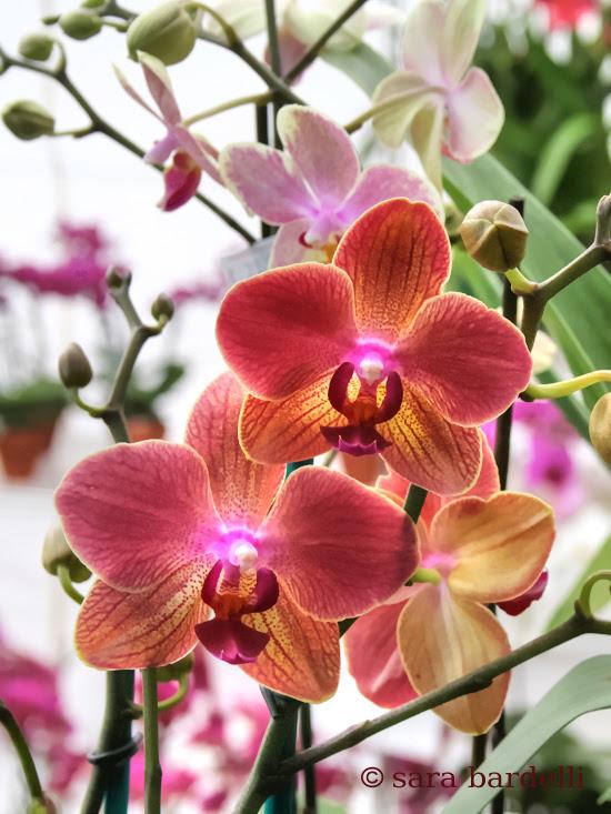 fiori 10