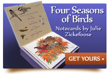 Four Seasons of Birds Notecards. Click to Order