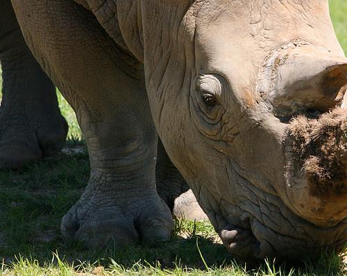 Zoomed in Rhino