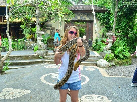 python - Picture of Bali Zoo, Gianyar - TripAdvisor