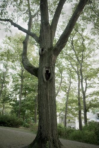 Spooktree