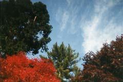 Biltmore Fall