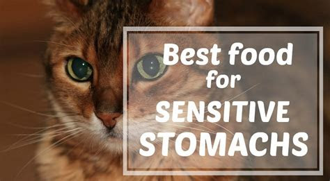 cat food  sensitive stomach vomiting reviews