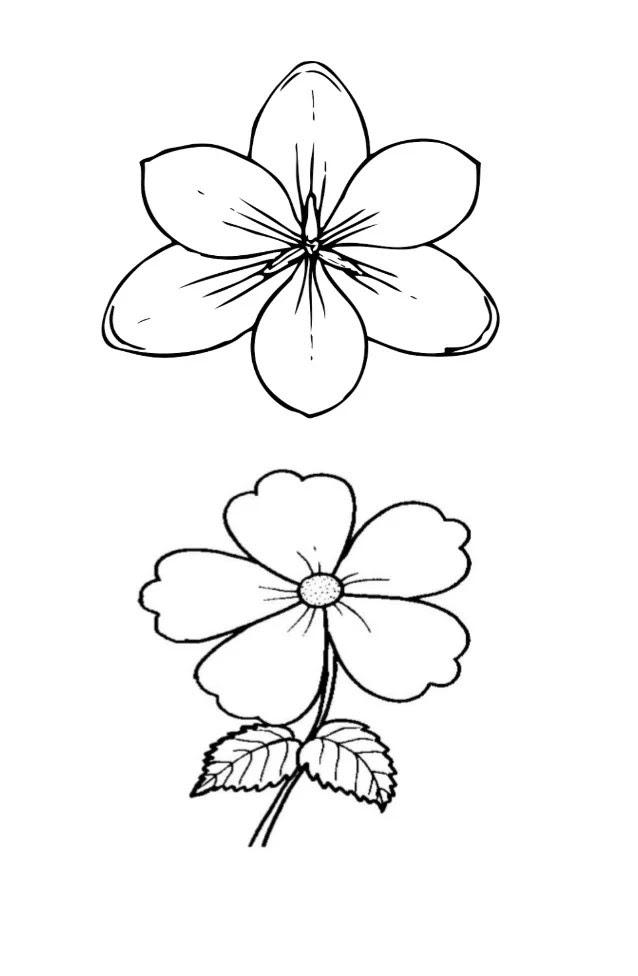 Gambar Sketsa Bunga Mawar Yang Mudah Auto Electrical Wiring Diagram