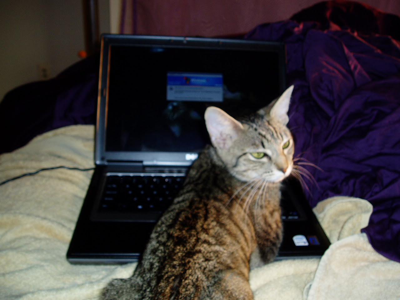 Little Ashley at the computer