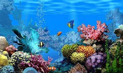 Unduh 400 Koleksi Background Aquarium Keren HD Gratis