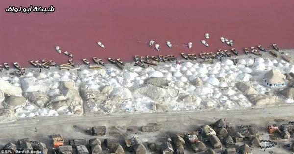 صور : بحيرة الفراولة