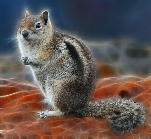 Fractalius Squirrel