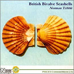 Bivalve Seashells Of Florida