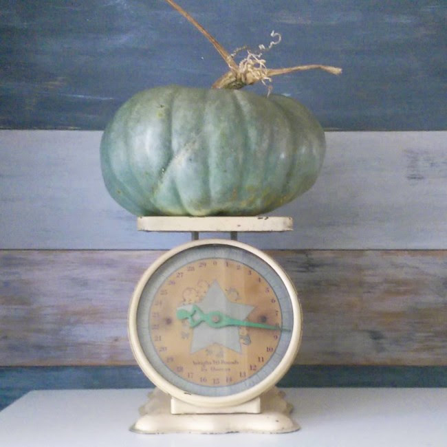 @lovelyetc My weekend finds. We got my first blue pumpkin ever at the pumpkin patch and it is gorgeous! And I found this vintage scale at a yard sale for $5. It has cute little babies on the front and the seller said it was a 1947 baby scale. #pumpkin #fallhomedecor