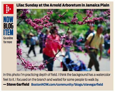 BostonNOW Lilac Sunday
