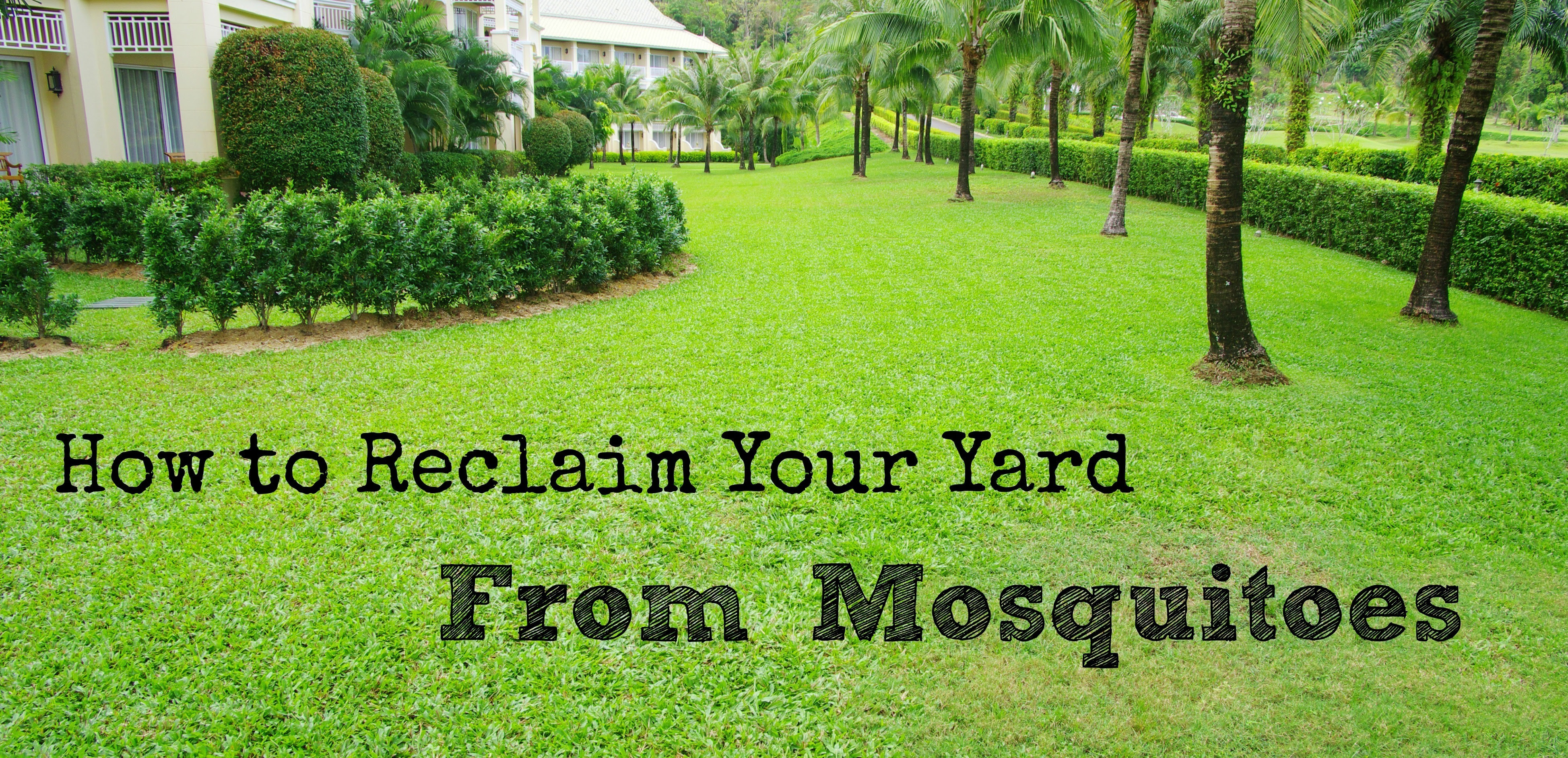 How to Reclaim Your Yard from Mosquitoes | Wisconsin Mommy
