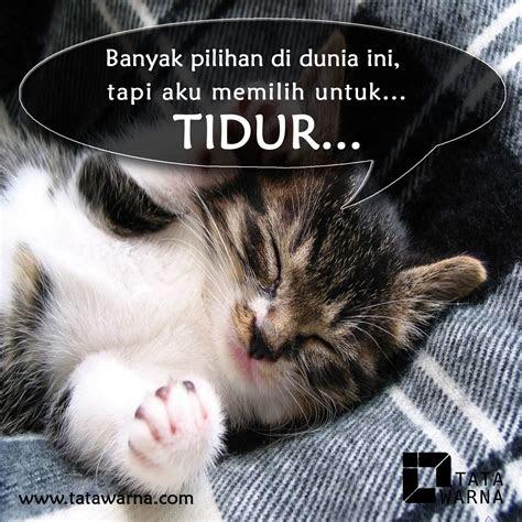 dp lucu kucing tidur jurnal magang shasa