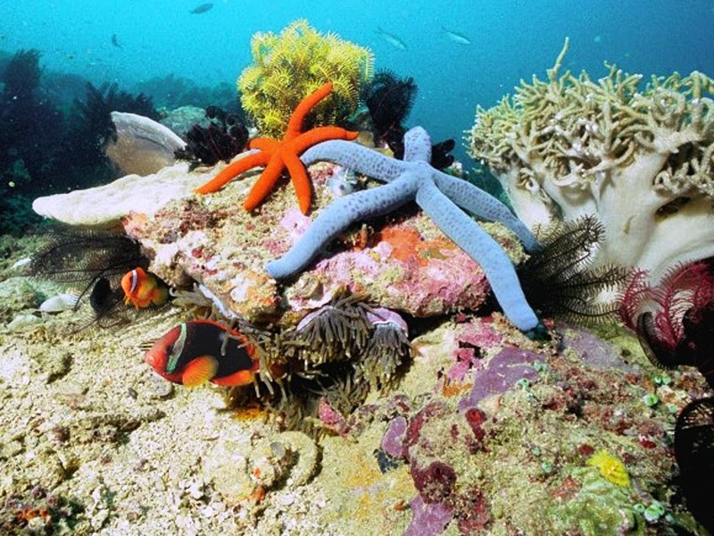 Coral Reef Adventure a