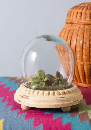 http://www.modcloth.com/shop/decorative-accessories/plant-and-simple-terrarium?new_pdp_layout=true