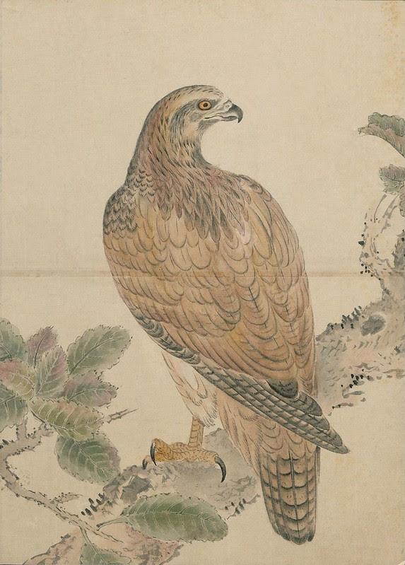 Ink + Watercolour  Bird sketch p