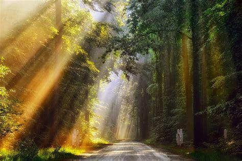 netherlands morning summer june forest light rays road