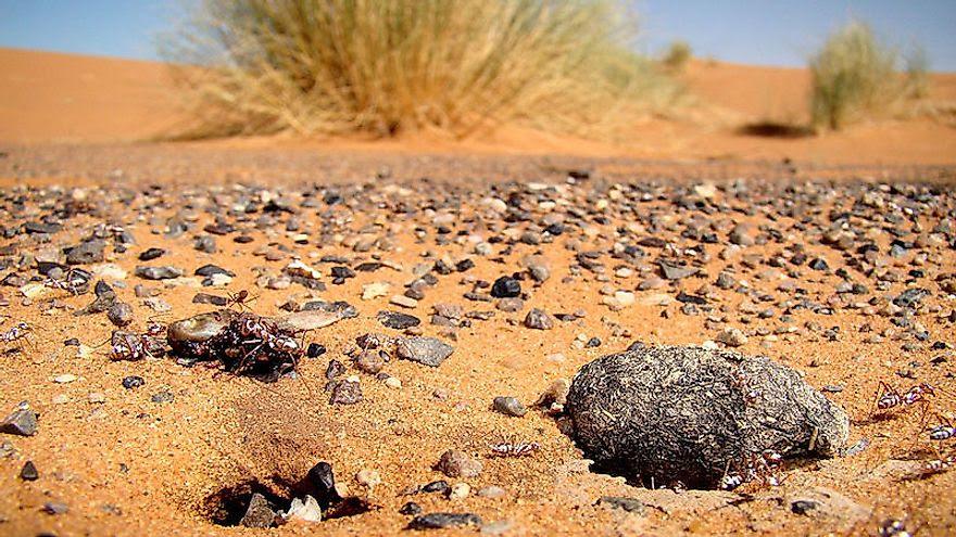 1024px erg chebbi silver ant nest