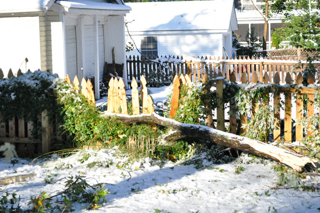 octobersnowstorm_fence
