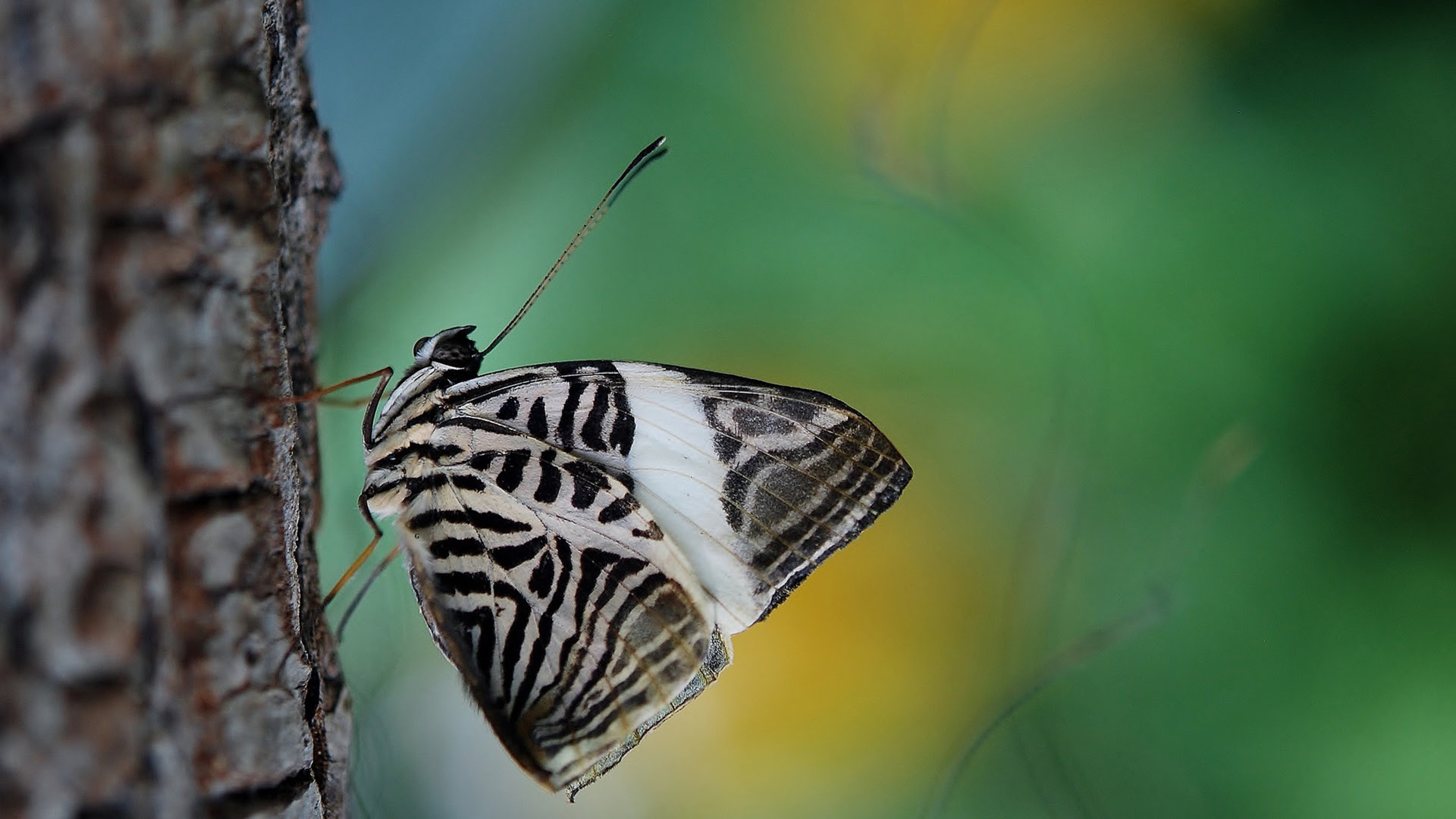 Butterfly(1920×1080)