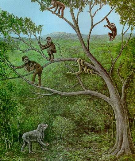 Proconsul is an extinct genus of primates that existed from 23 to 5 million years ago during the Miocene epoch.