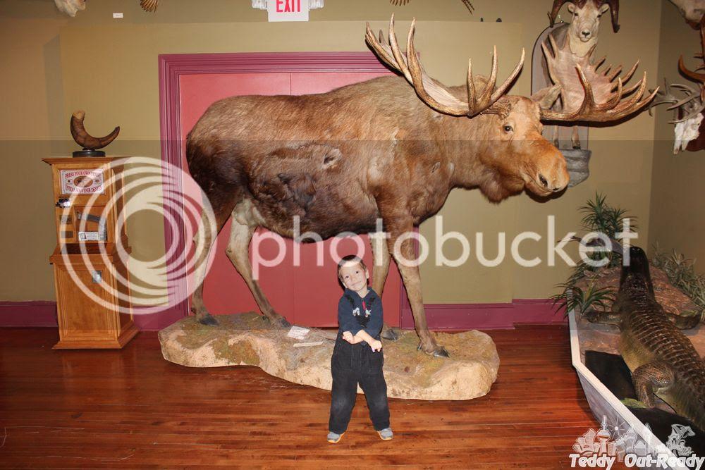 Texas Museum Moose
