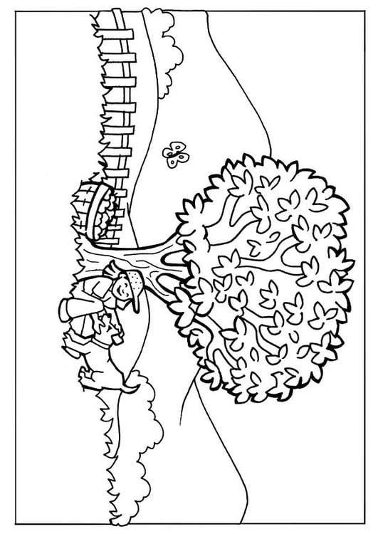 Dibujo Para Colorear Naturaleza Img 7106