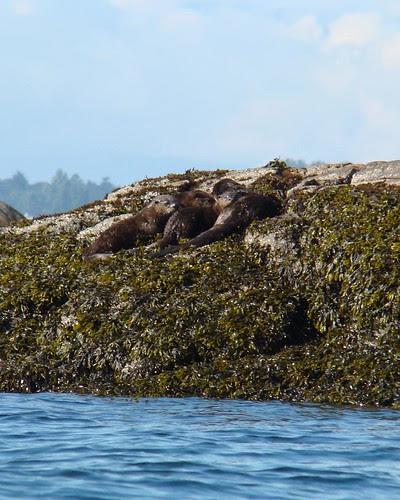 2008-08-10 Chatham Island 496