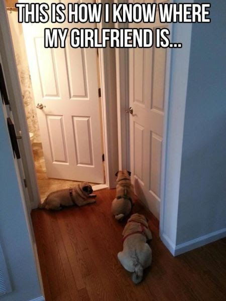 Dog Pictures That Are Funny Because They Are So True