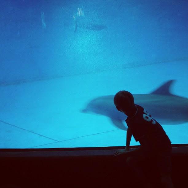 Dolphin & boy. Day_083