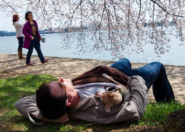 Homem foi flagrado tirando soneca com seu cão embaixo de uma cerejeira em Washington DC (EUA) (Foto: Karen Bleier/AFP)
