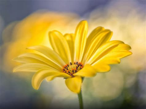 nice yellow flower desktop wallpaper hd