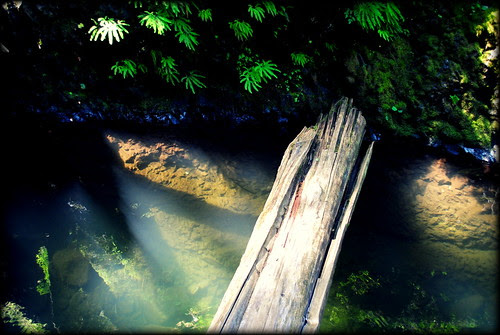 At the Oneonta Gorge log jam