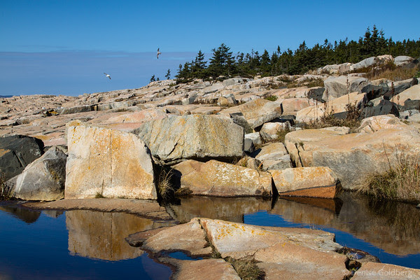 rocks and reflections, on the Schoodic Peninsula, Acadia National Park