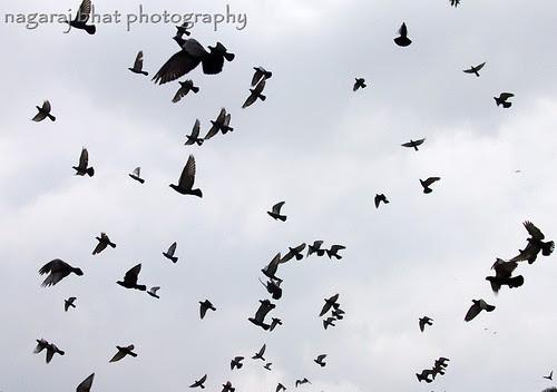 Kites by Dehalli Nagaraj Bhat