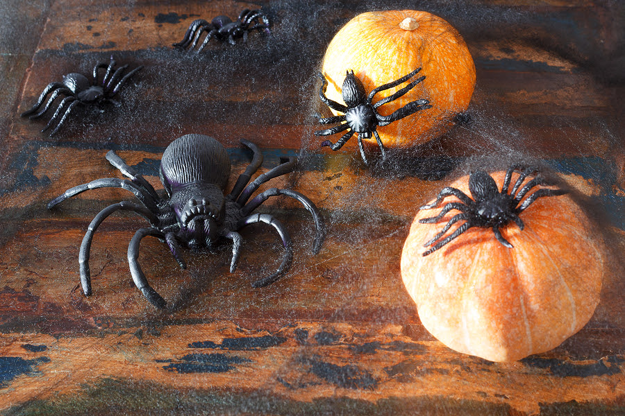 Spiders in Your House? Ask the Mouse. | Atlanta Pest Control